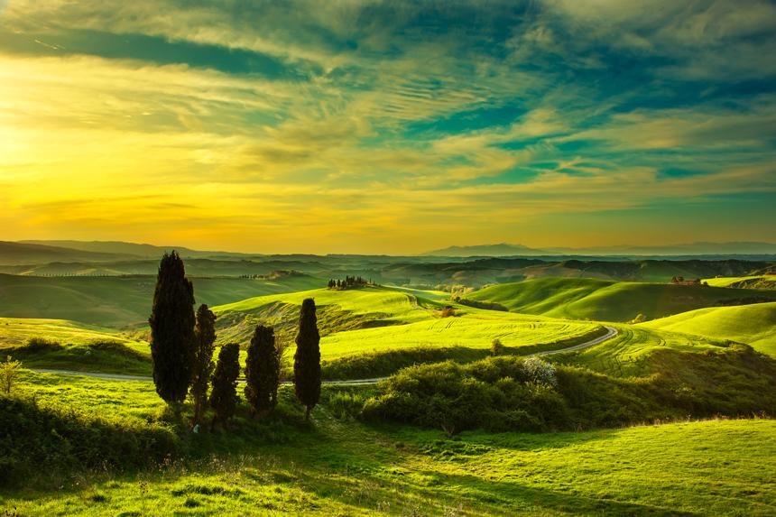 7)-Cypress-trees,-green-field